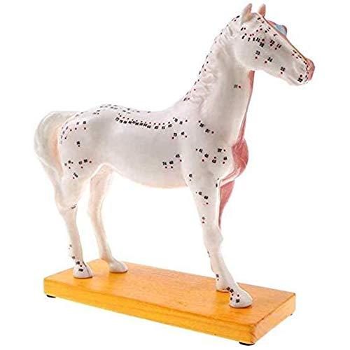DMZH Forschung Akupunktur Pferd Tiermodell Tier Anatomisches Modell Für Die Medizinische Veterinary Akupunktur Tier Anatomische Referenz Kinder Kommt