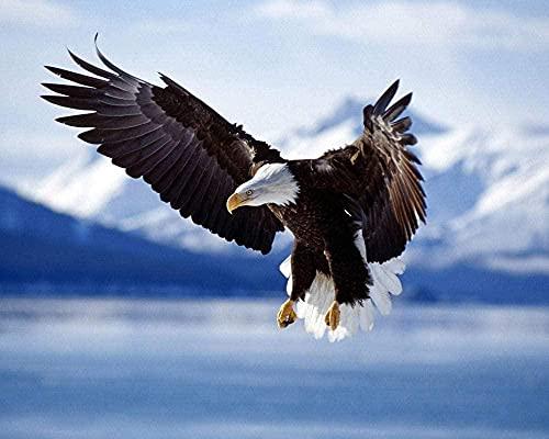 5D DIY pintura de diamante bordado dibujo imagen pájaro águila animal costura regalo completo diamante mosaico punto de cruz decoración del hogar 40,6 x 50,8 cm