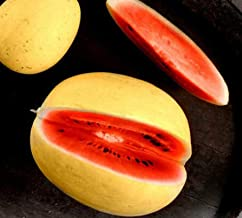 Seeds Golden Midget Watermelon Seeds Hard to Find and Delicious Get 10 Seeds #PAJ01YN
