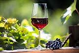 KADAX Rotweingläser aus Kristallglas, 6er Set, 450ml, schöne Weingläser mit hohe Stiel, Rotweinkelche für zu Hause, Party, hochwertige Qualität, breiter Untersetzer - 2