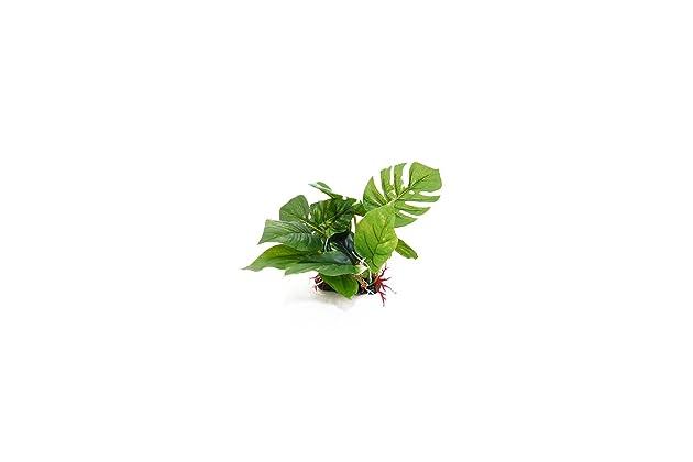 Best Reptile Plants For Terrarium Amazon Com