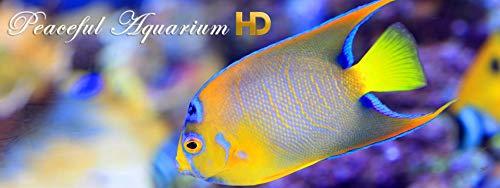 『Peaceful Aquarium HD』の10枚目の画像