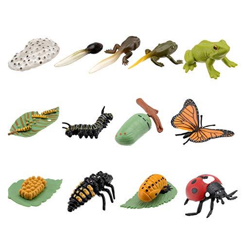 NUOBESTY 3 Juegos de Figuras de Animales Mariposa Mariquita Rana Ciclo de Vida Plástico Realista Modelo de Insectos Juguetes Educativos para Niños Pequeños Niños de Colores Surtidos