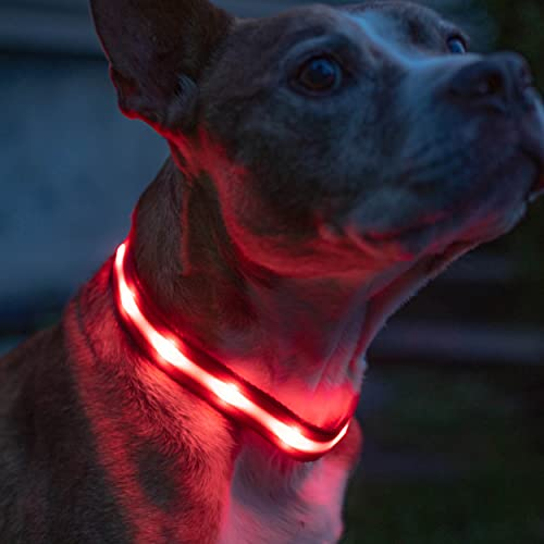 Blazin' Safety LED Dog Collar – USB Rechargeable with Water Resistant Flashing Light – Large Red