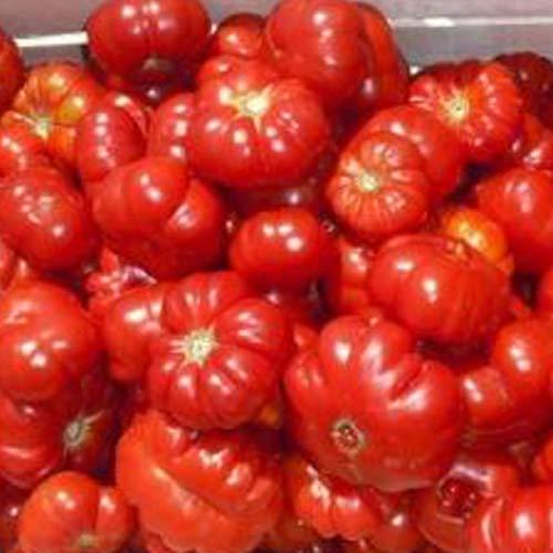 Tomate Montserrat 20 zaden uit Portugal 100% natuurlijk kweekbaar/absolute zeldzaamheid/massagedrager, ideaal voor salades en snacks