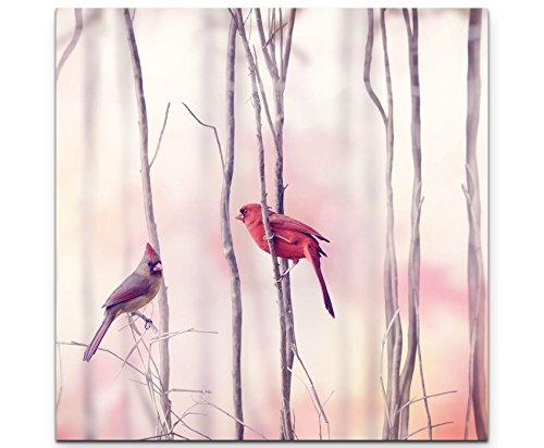 Paul Sinus Art Leinwandbilder   Bilder Leinwand 60x60cm Rotkardinal im Baum