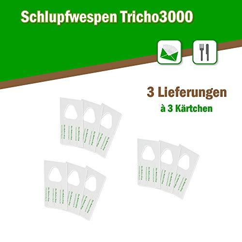 Der Motten-Shop  Schlupfwespen gegen Lebensmittelmotten 3 Kärtchen je 3000 Stück x 3 Lieferungen