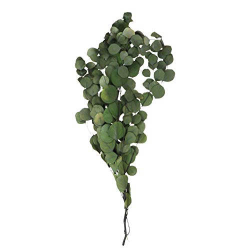 Cabilock Eucalipto Flor Seca Preservada Ramas de Eucalipto Frescas Vegetación Falsa para Arreglos Florales Boda Decoración del Hogar Centro de Mesa (Verde)