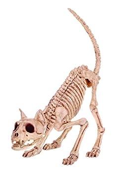 Best cat skeleton Reviews