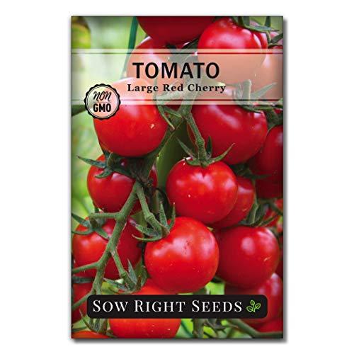 NON GMO Heirloom Tomato Necessary Size Vegetable Seeds