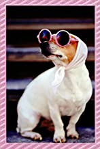 Audrey Hepburn Dog with Pink Glasses in Focus Feminine Birthday Card for Her/Woman