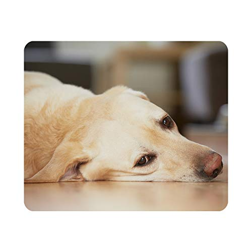 Nicokee Gaming Mouse Pad Yellow Labrador Retriever is Waiting at Home Non-Slip Rubber Mouse Pad for Computers, Laptop, Office, Home Rectangle Personalized Mousepad 9.5 Inch x 7.9 Inch