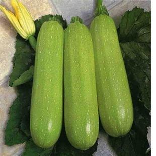 Vente chaude Ya graines de courgettes vertes 10pcs graines de légumes sains - Arcis nouvelles