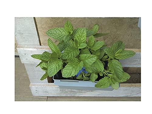 GREEN AT HOME: Kit di 9 fioriere da appendere su pallet e ringhiere, per piante e fiori da giardino, da interno o esterno, erbe aromatiche, natura nella tua casa