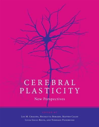 Cerebral Plasticity: New Perspectives (The MIT Press) (English Edition)