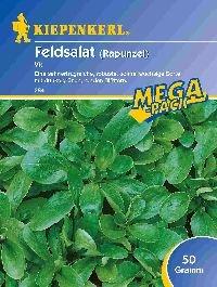 Salatsamen - Feldsalat Vit von Kiepenkerl