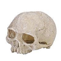 スカルスタチュー、絶妙な形状の頭骨スカルスタチュー、水族館用の水槽
