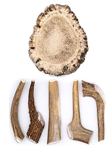 Perfect Pet Chews Deer Antler Dog Chew - Grade A, Organic, and Long Lasting Treats - Made from Naturally Shed Antlers in The USA (D. Medium - Dog Weight 20–40 Lbs, 5 - Pack) and Medium Burr Bundle