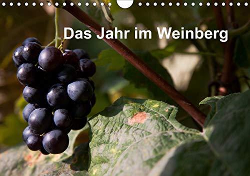 Das Jahr im Weinberg (Wandkalender 2021 DIN A4 quer)