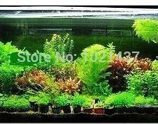 Amazon.es: semillas de plantas de acuario