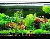 Promoción 1500 semillas de 15 tipos de semillas de peces de acuario tanque de agua semillas de la hierba Planta acuática de bricolaje