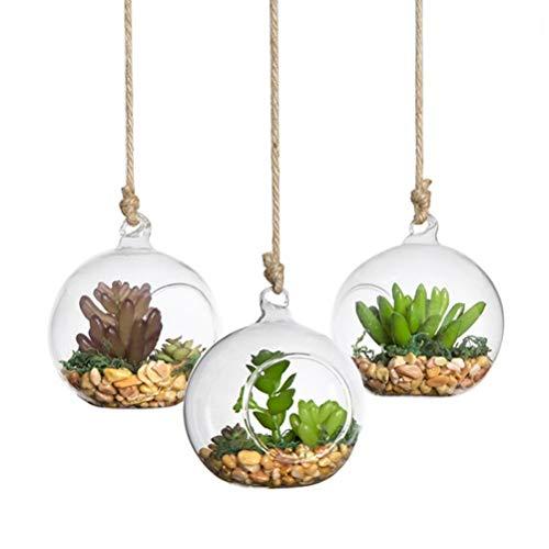 Yardwe 2pcs Glas Pflanzgefäße Wandbehang Klar Pflanzgefäße Hängen Glasterrarium Glaskugel Vase für Blumen Pflanzen Sukkulenten 80mm