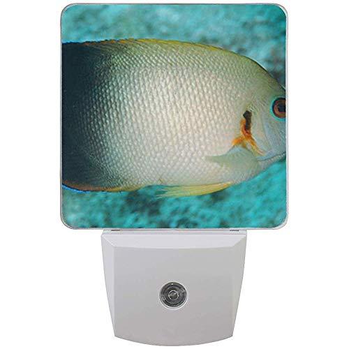 Katrine Store Nachtlicht Pearlscale Angelfish Auto Senor Dämmerung bis Morgendämmerung LED-Licht Lampe für Flur, Küche, Bad, Schlafzimmer, Treppe