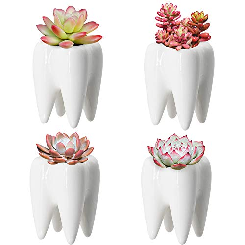 Teeth Pots