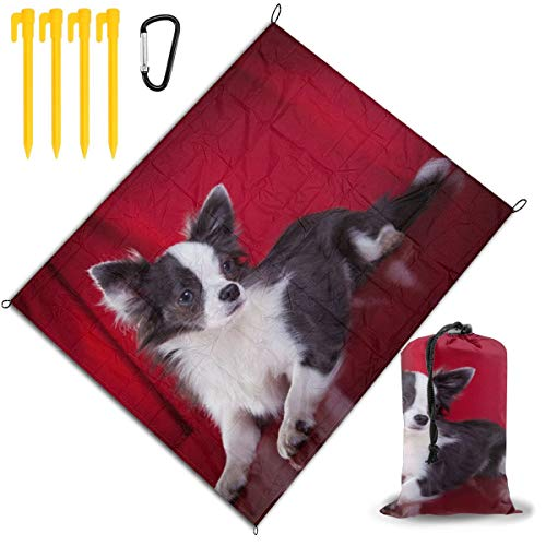 Buy Discount Outdoor Picnic Blanket 67x57inch Chihuahua Lay On The Red Ground Foldable Waterproof Ex...