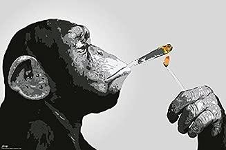 monkey smoking weed