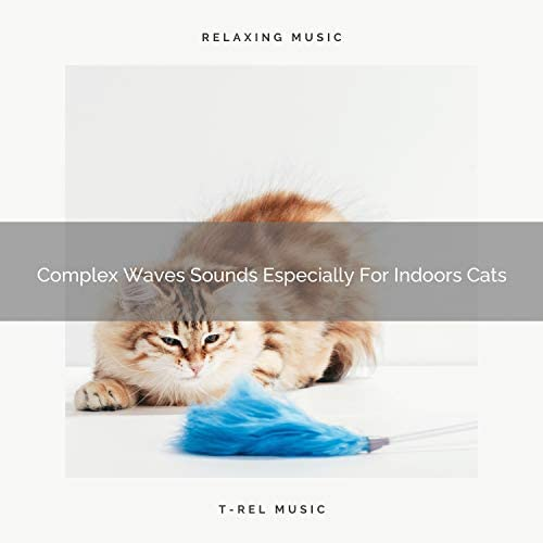 Cats Music Den