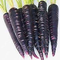 Kisshes Seeds- 100Pcs Semillas Vegetales,Las Plantas Vegetales de jardín florecen Las Semillas de Zanahorias