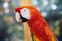 パズル500個写真鳥オウム動物クリスマスプレゼント52x38cm