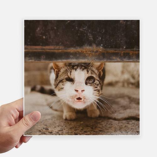 DIYthinker Photo Funny Animal Cat Pousse Autocollant carré de 20 cm Mur Valise pour Ordinateur Portable Motobike Decal 4Pcs 20cm x 20cm Multicolor