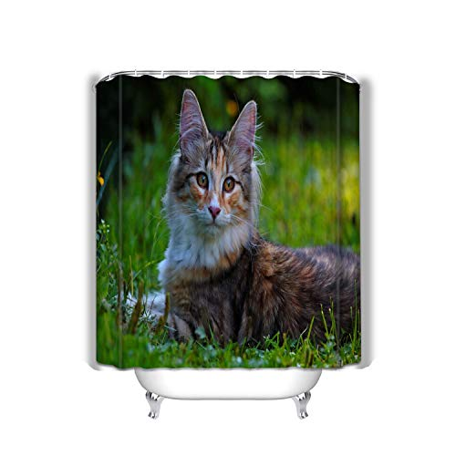 Xunulyn Beach Shower Curtain Sweet Norwegian Forest cat Kitten Lying Around Lawn summerday Norwegian Forest cat Kitten summerday Fabric Bathroom Decor 60 X 72 Inch