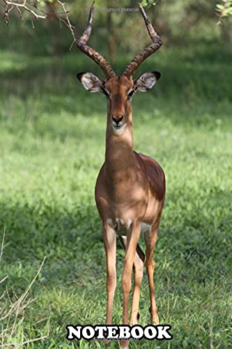 Notebook: Kob Antilope In Senegal , Journal for Writing, College Ruled Size 6