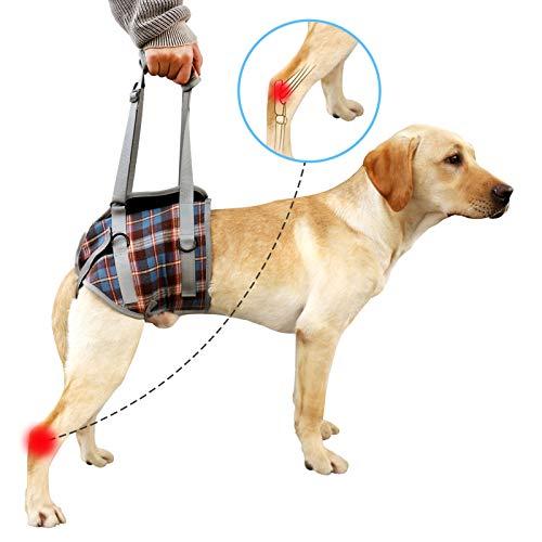 Hundegeschirr Hinterbein Tragehilfe Hunde Gehhilfe Unterstützung Harness Hunde Zurück Beine Heben Verstellbares Hüftstützgeschirr bei Altersschwäche Behinderungen Rehabilitation(blau,M)