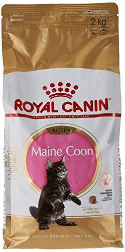 ROYAL CANIN Kitten Maine Coon - Comida para Gatos, 2 kg 🔥