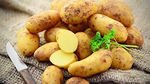 Tepenhof Frische Kartoffeln Frühkartoffeln Annabell festkochend super lecker 12,5kg goldgelb Kartoffel Annabelle