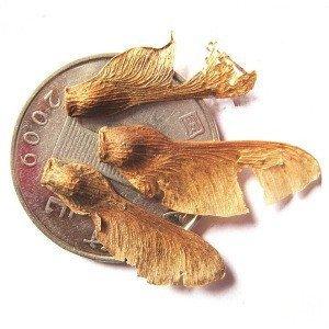 10 PCS graines d'arbres, authentiques importation américaine rouge graines de l'érable, les plantes à feuillage rouge des quatre saisons