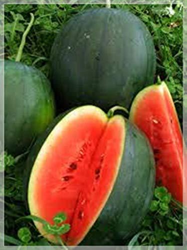 10 PCS Black Tail Mountain Watermelon PCS, Natural Watermelon, Herliom A022 Outdoor