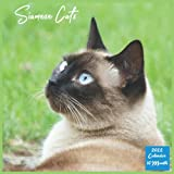 2022 Siamese Cats Calendar 16 Month: Official Siamese Cats Calendar 2022, 16 Month Square Calendar