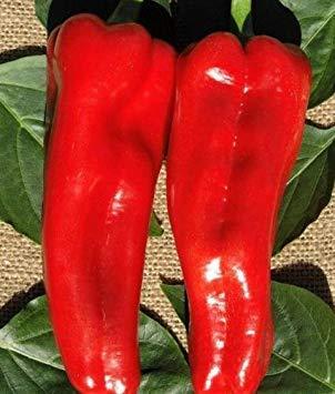 FERRY Keimfutter: 50 Pepper Samen Red Marconi Hybrid Paprika Seeds