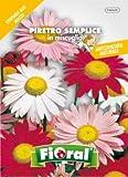 Sementi da fiore di qualità in bustina per uso amatoriale (PIRETRO SEMPLICE IN MISCUGLIO)