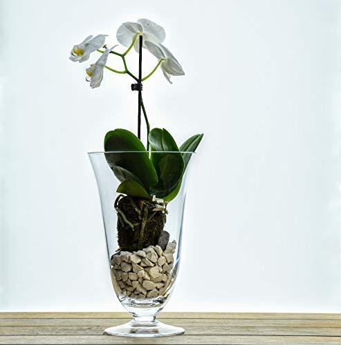 Solavia Verre Clair Hurricane Bougie Lanterne Support 24.5 x 15 cm | Bell Pot à orchidée
