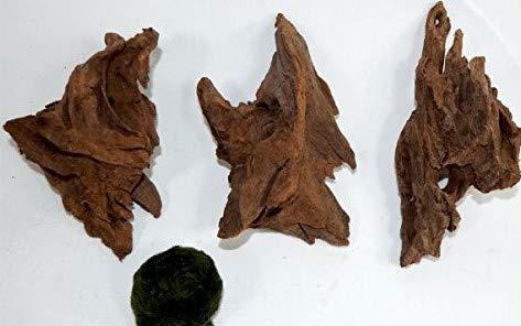 SAHAWA Wurzel,3 Mangrovenwurzeln, Mangrove, Aquariumwurzel+ Mooskugel Gratis Aquarium, Terrarium Deko ca. 12-15 cm