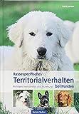 Rassespezifisches Territorialverhalten bei Hunden: Richtiges Verständnis und Erziehung