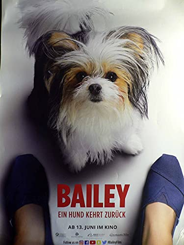 Bailey - Ein Hund kehrt zurück - Teaser - Filmposter A1 84x60cm gerollt (4)