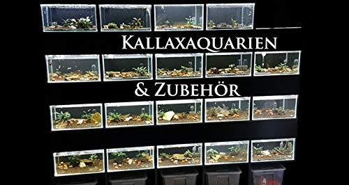 Salty Bee Kallax Aquarium 33x38x22cm - Kallaxbecken, Aquarium passend für Wohnzimmerschrank Kallax