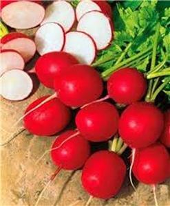 Rettich. Cherry Belle Radieschen-Samen, Bio, NON-GMO, 200 Samen pro Packung